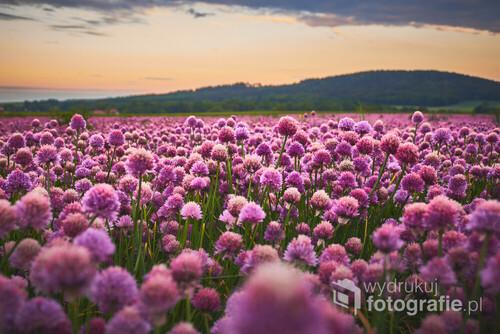 Nie sądziłem, że kwitnący czosnek może być tak bardzo fotogeniczny. A ten zapach... :)