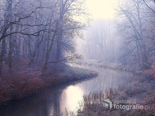 Fotografia została wykonana w parku w miejscowości Sławięcice woj Opolskie, w mroźny lutowy poranek.