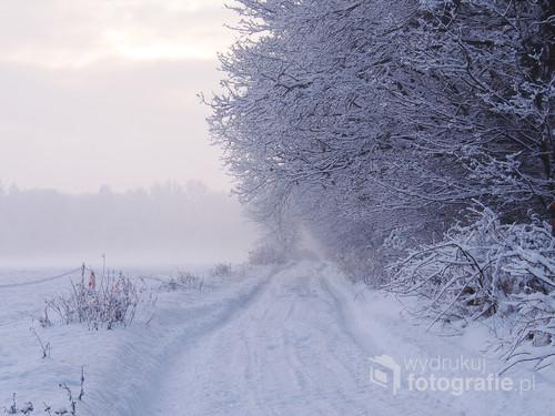 Zdjęcie zrobione w zimowy lutowy poranek, w miejscowości Ujazd w województwie Opolskim.
