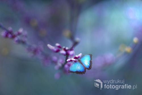 Kolejne zdjęcie z cyklu Motyle, zrobione o zachodzie słońa w ogrodzie. Miękkie pastelowe tło, spokojne pastelowe barwy.