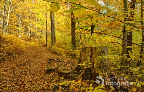 Fragment górskiego szlaku w kolorach jesieni. Zdjęcie wykonane w okolicach Zagórza Śląskiego i Jeziora Bystrzyckiego, w październiku 2020r.