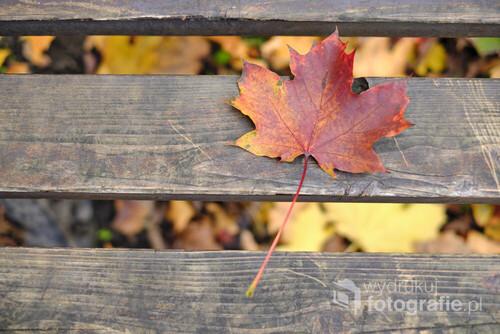 Jesienny liść, na ławce na skwerze w pobliżu mojego domu we Wrocławiu