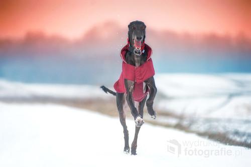 dla miłośników psów a zwłaszcza chartów. Szczęsliwy pies, który zyje dzieki ludziom o ogromym sercu dla zwierzat.