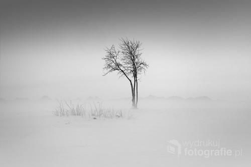 Fotografia wykonana na Podhalu w zimowej scenerii. Przedstawia Drzewo we mgle na tle Tatr. Nagrodzona na konkursie pod patronatem FIAP w Czechach Praca pochodzi z cyklu