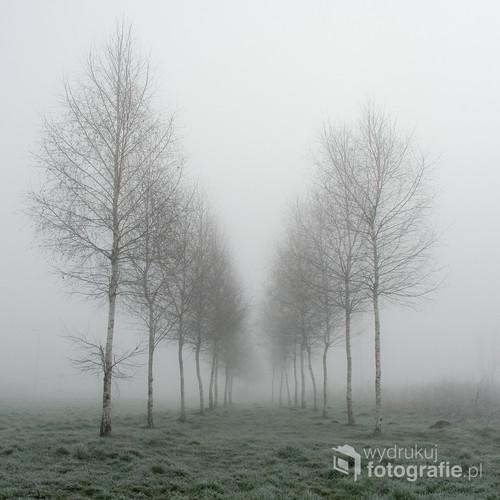 Zdjęcie zostało wykonane w 2014 roku w Toruniu, dzielnica Podgórz.  Konkursy: Fotoferia International Exhibition Acceptance