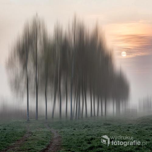 Zdjęcie wykonałam w mglisty jesienny poranek przy przebijającym się przez mgłę słońcu. Podczas obróbki starałam się zachować klimat poranka ale też wprowadzić nastrój nierzeczywisty.