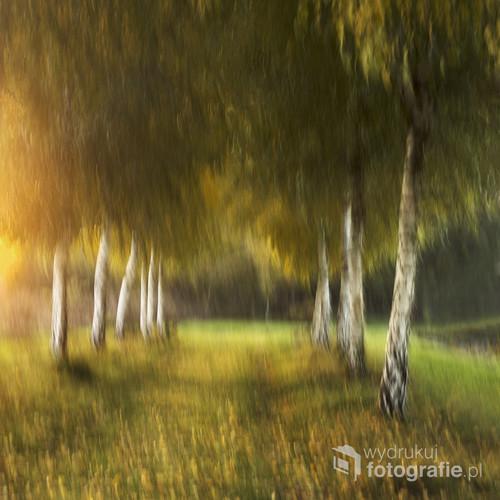 Zdjęcie zostało wykonane jesienią w piękne słoneczne popołudnie. Efekt poruszenia (tzw. mototypia) został osiągnięty poruszeniem aparatu. Zamiarem moim było uzyskanie efektu malarskiego. Czy się udało? Mnie się wydaje, ze tak.