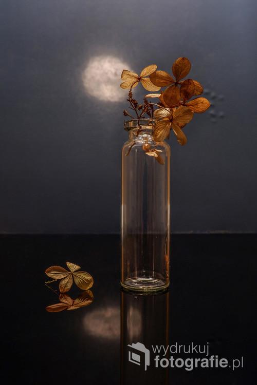 Hortensja w wersji minimalistycznej kształtu i koloru.