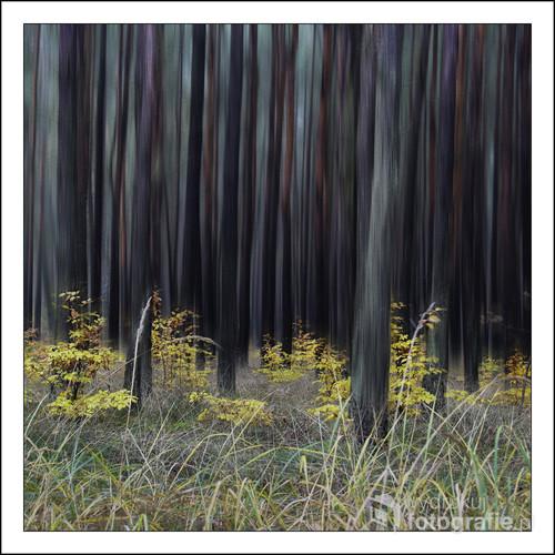 Foto wykonałam w pochmurny dzień w pobliskim lesie. Światło nie sprzyjało stąd pomysł na taką fotografię.
