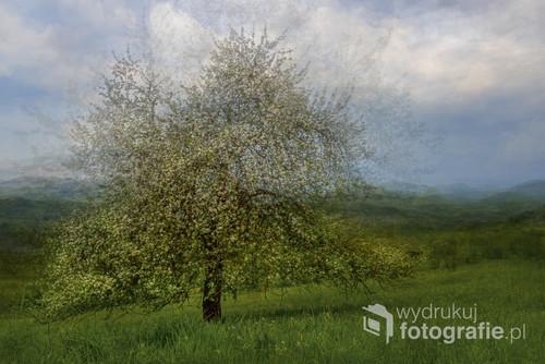 Foto wykonałam w majowy poranek w okolicy Kasiny Wielkiej. Zastosowałam w edycji wielokrotną ekspozycję.