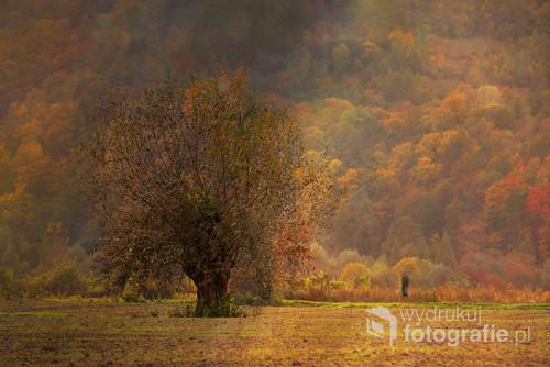 Była piękna październikowa jesień w miejscowości Piaski - Dróżków w województwie małopolskim. Prom na rzece Dunajec miał awarię a ja miałam czas by przechadzać się po pięknej o tej porze roku okolicy i wypatrzeć drzewo na łące na tle zalesionego zbocza. Kolory mnie urzekły.