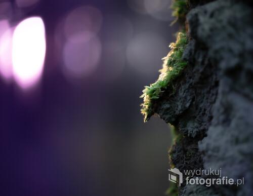 Mech w lesie na korze drzewa w blasku świateł