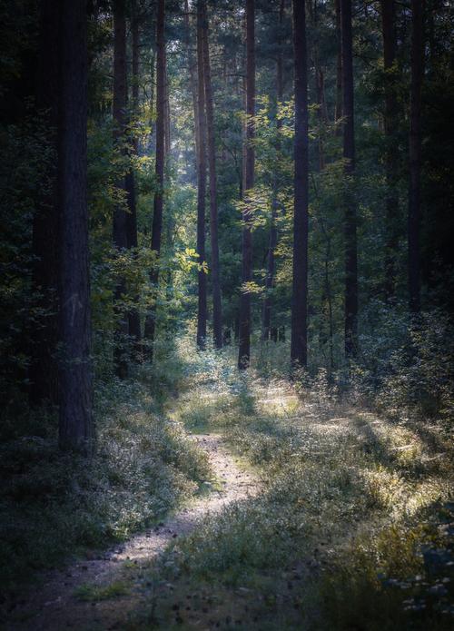 Zdjęcie wykonane wczesnym rankiem w lesie na Śląsku. Pierwsze promienie słońca oświetlające ścieżkę leśną.