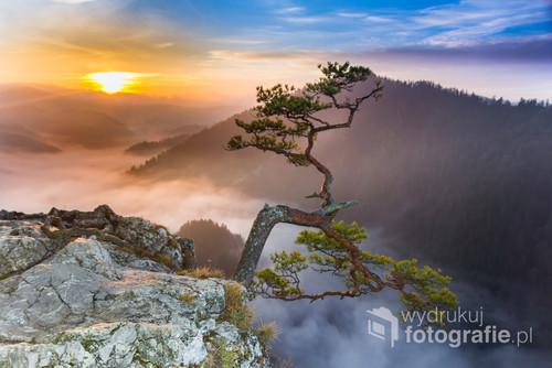 Szczyt Sokolicy to jedno z moich ulubionych miejsc w Pieninach. Każdego razu jest trochę inna. Czasem, w taki dzień jak ten przełom Dunajca spowija mgła. Polecam poranny wypad na szczyt, aby samemu przekonać się jaką niespodziankę szykuje nam natura.