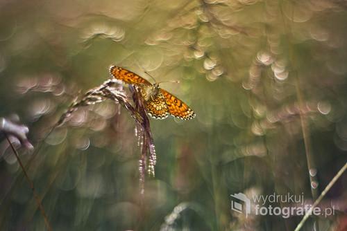Mówi się, że kto rano wstaje... to jest prawda :) Zdjęcie zrobione w Nadbużańskim Parku Krajobrazowym o świcie.