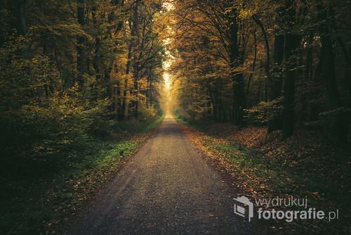 Jesienna ścieżka w Puszczy Niepołomickiej