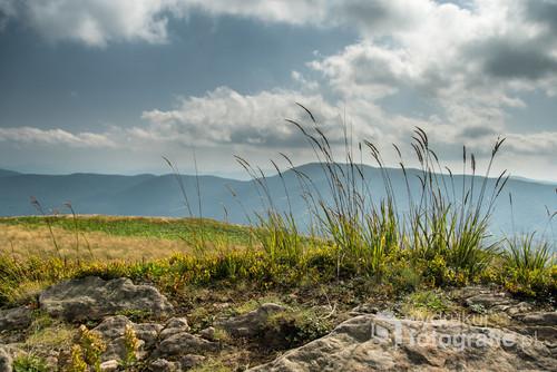 Charakterystyczne trawy na grani Połoniny Caryńskiej w Bieszczadach.