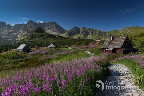 Fotografia przedstawia widok na Dolinę Gąsienicową w Tatrach