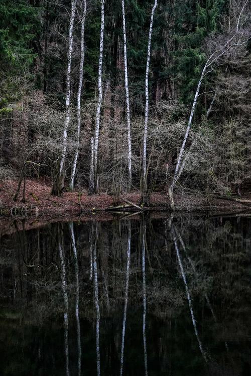 Drzewa nad Bobrem. Bezwietrzny, ciepły dzień styczniowy, nastrajający do spacerów we dwoje. Cisza warta zapamiętania.