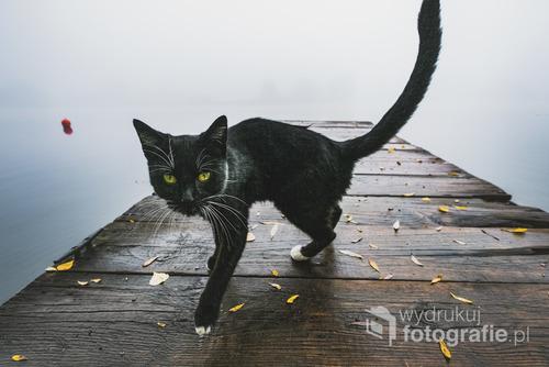 W mglisty poranek nad Odrą podczas zdjęć pejzażu odwiedził mnie pewien czarny przybysz. Niezwykle miła i ruchliwa, spacerowaliśmy razem w te i nazad, aby uchwycić Filemona;)  Fotografia wyróżniona w 13 edycji Wielkiego Konkursu Fotograficznego National Geographic w kategorii zwierzęta.