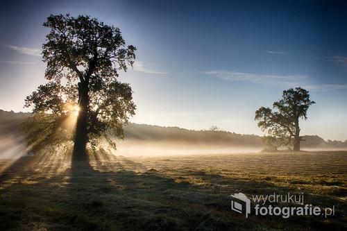 Wiosenny wschód słońca w Rogalinku