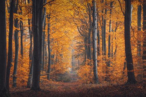 Fotografia przedstawia jesienny, bukowy las w okolicy Łodzi.