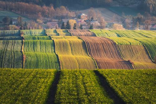 Fotografia przedstawia kolorowe, pofalowane pola na Wyżynie Miechowskiej.