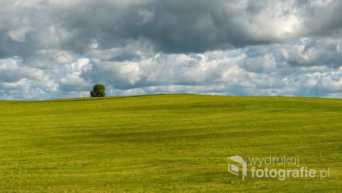 Ciężkie chmury nad zieloną łąką, samotne drzewo za pagórkiem i stado bocianów i żurawi. Cudowny spokój i cisza