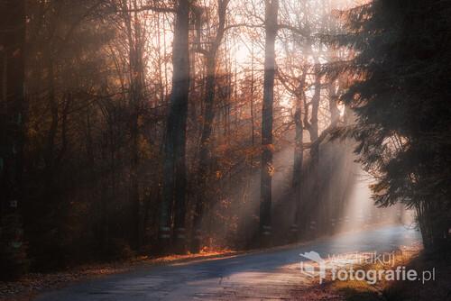 Piękne promienie Słoneczne przenikające przez drzewa na Drodze Stu Zakrętów między Kudowa Zdrój a Karłowem