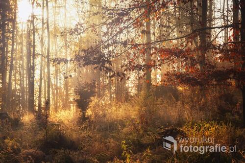 Jesienny leśny klimat poranka
