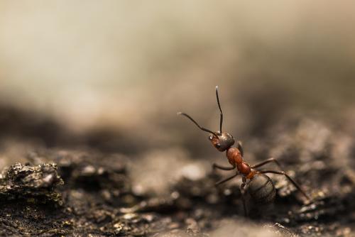 Zdjęcie mrówki wykonałem wiosną 2021r.