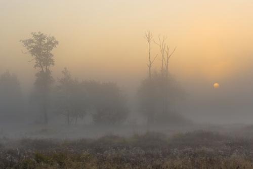 Zdjęcie wykonałem na terenie Kampinoskiego Parku Narodowego 14 10 2018. Do wykonania zdjęcia użyłem Canona 6D i Canona 17-40 f/4