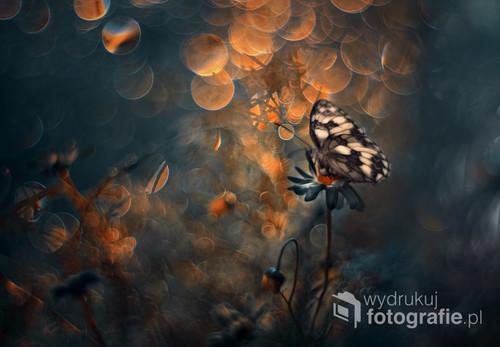 Wariacja łąkowa z nutką bokehowego szaleństwa Zdjęcie brało udział w wystawie Foto Open na FotoArtFestiwalu