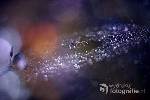 Kosmiczne zdjęcie pajęczyny w rosie :-) Zdjęcie brało udział w wystawie Foto Open na FotoArtFestivalu