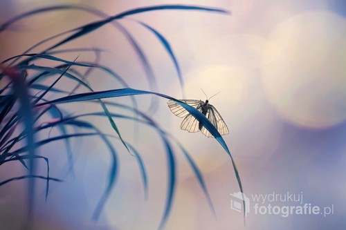 Wariacja kolorystyczna z udzialem wiosennego motyla
