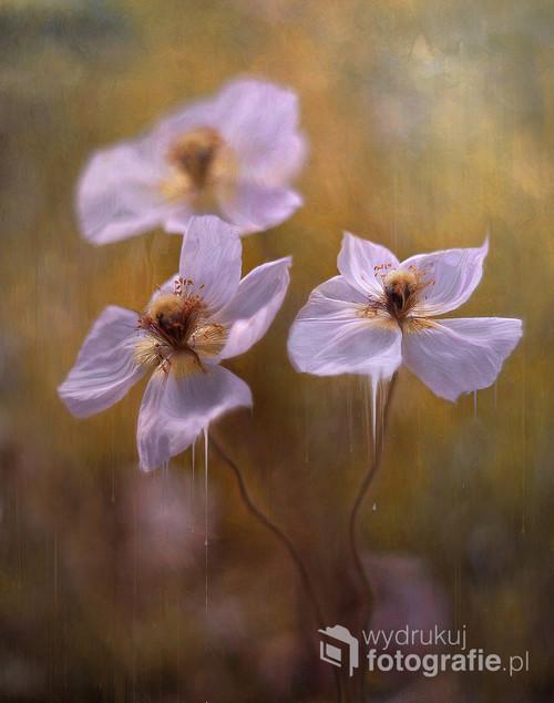 Kwiaty w malarskiej odsłonie