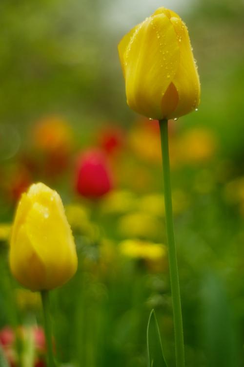 Zdjęcie z własnego ogrodu.
