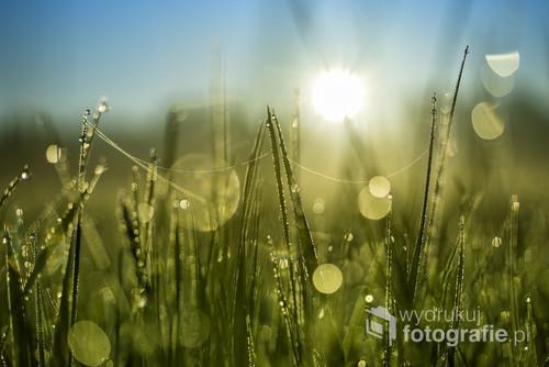 Zdjęcie zrobione pod światło w piękny i mglisty poranek przed godziną 5 am.