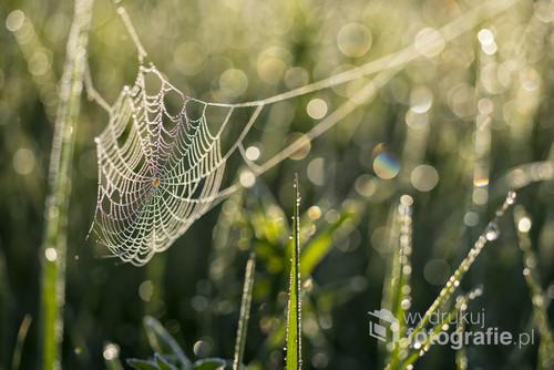 Pajęczyna ze śpiącym pająkiem :) . Zdjęcie zrobione w piękny i mglisty poranek przed godziną 5 am.