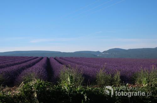 Fotografia została wykonana w Prowansji, we Francji. Przedstawia piękne, fioletowe, lawendowe pole, łąkę, nad którą unosił się przepiękny zapach lawendy.  Wykonana została techniką cyfrową, z ustawieniami manualnymi.