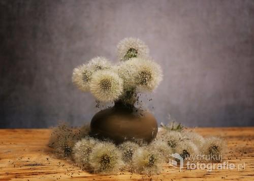obraz martwej natury z kwiatami dmuchawca