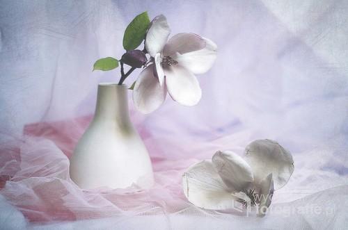 martwa natura z magnoliami