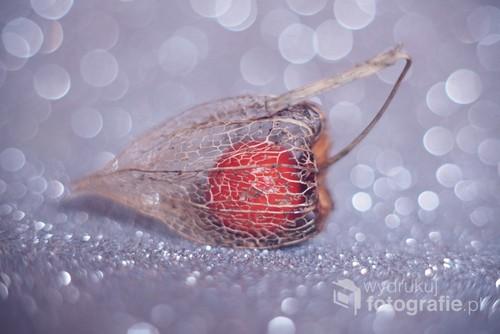 owoce miechunki w bokehowym tle