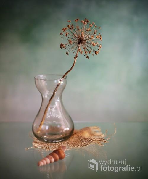 martwa natura z muszlą i suchym kwiatem czosnku