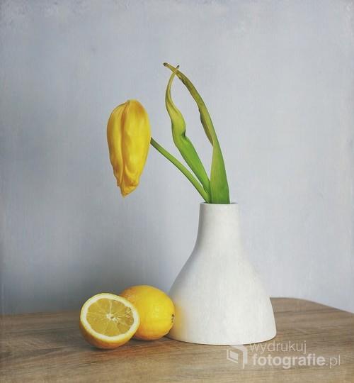martwa natura z tulipanem i cytryną