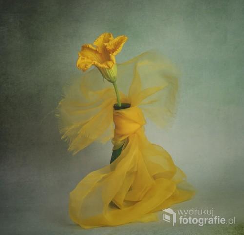obraz z kwiatem dyni