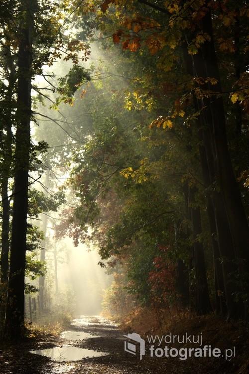 Jesienny wypad w Sudety a po drodze  wczesnym rankiem zahaczyliśmy o masyw gór stołowych Ślęzę W drodze na górę piękne widoki