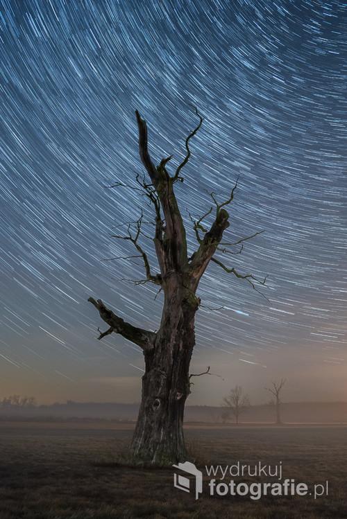 Fotografia przedstawia stary dąb sfotografowany na tle rozgwieżdżonego nieba w styczniu 2020 roku. Smugi na niebie są wynikiem długiego czasu naświetlania - zarejestrowany został pozorny ruch gwiazd na niebie związany z ruchem obrotowym Ziemi. Całkowity czas naświetlania wyniósł 15 minut.