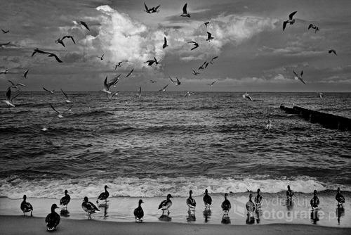 MIELNO - BALTIC SEA - 2013