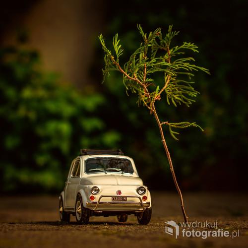 fotografia przedstawia model FIAT 500 w skali 1:18, została wykonana w słoneczny dzień, dzięki małej gałązce nabrała charakteru i wyrazu ;)